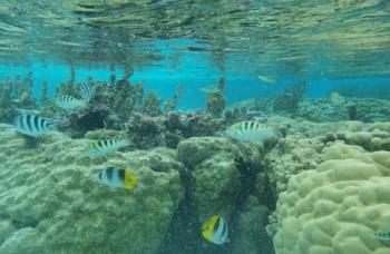 タハア サンゴ礁