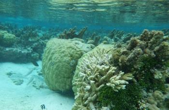 タヒチ サンゴ礁
